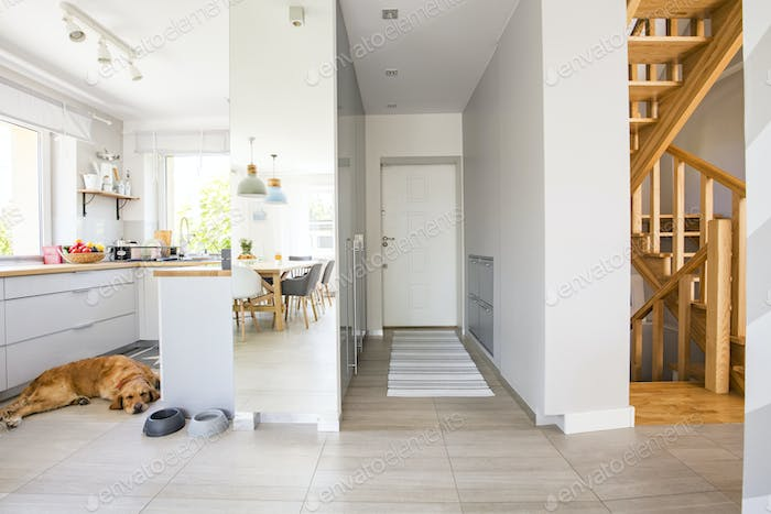 Dog in the kitchen with windows and carpet in hall interior of h