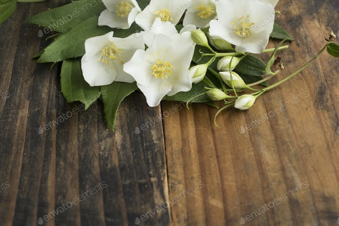 Jasmin with Copy Space on Rustic Wooden Background