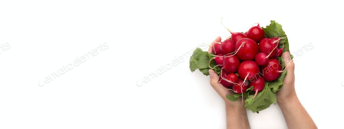 Woman holding fresh organic radish in hands isolated on white