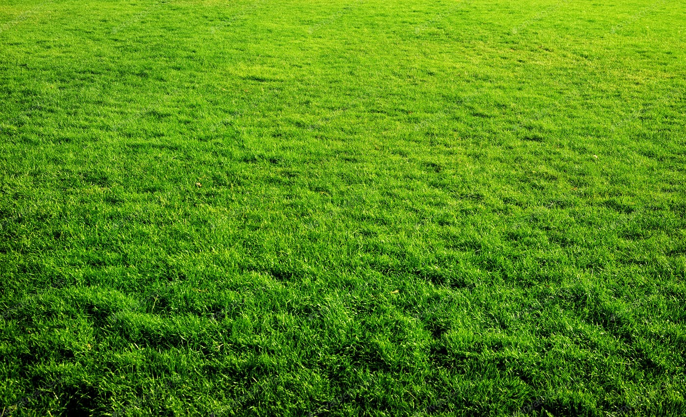 Green Grass Background Photo By Givaga On Envato Elements