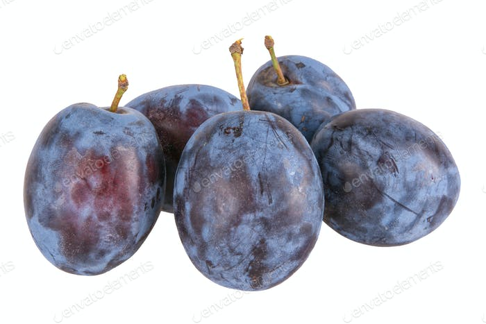 Blue plums on a white background
