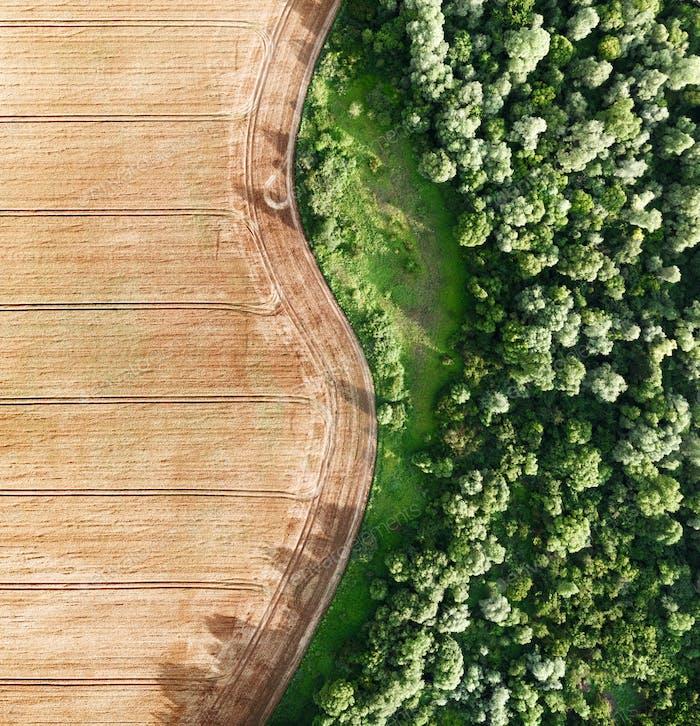 Luftaufnahmen fliegen über gelbes Korn Weizenfeld