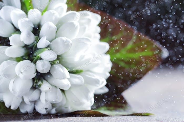 Schöne weiße Schneeglöckchen