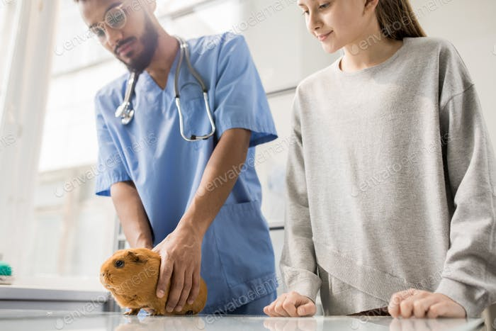 Doctor with guinea pig
