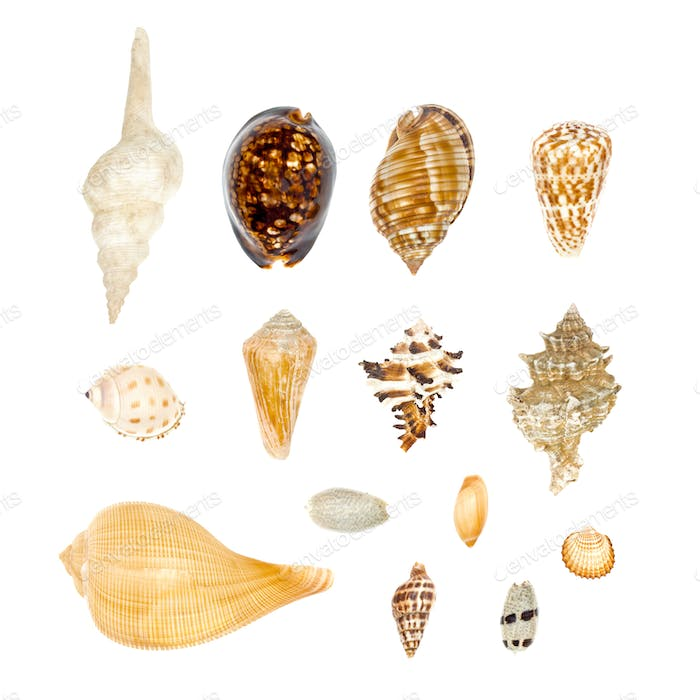 Sea Shell Collection Set isolated on white background