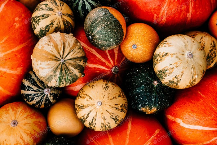 Pumpkin background for thanksgiving and halloween.