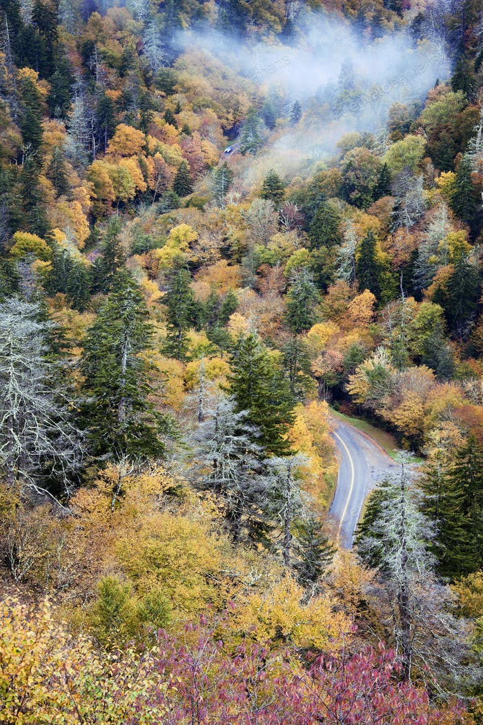 Cars driving through Smoky Mountains