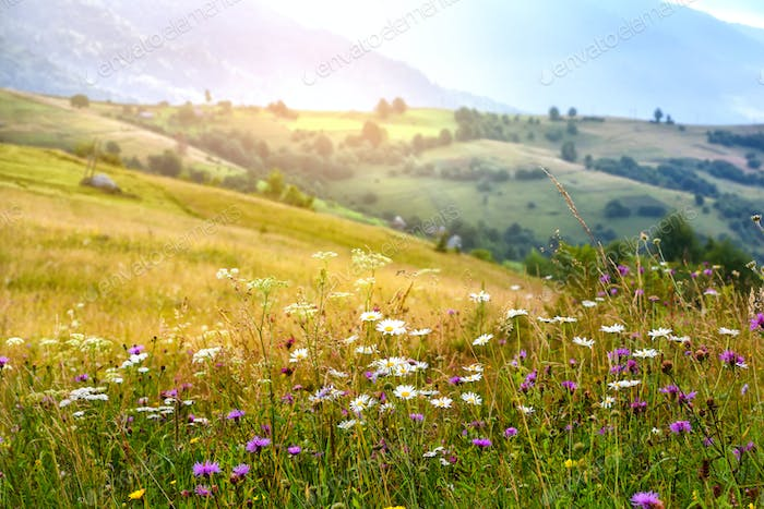 Beautiful summer sunrise in the Carpathian mountains. Ukraine, E