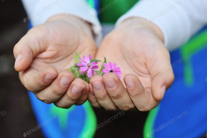 Closeup pink flowers in children's hands