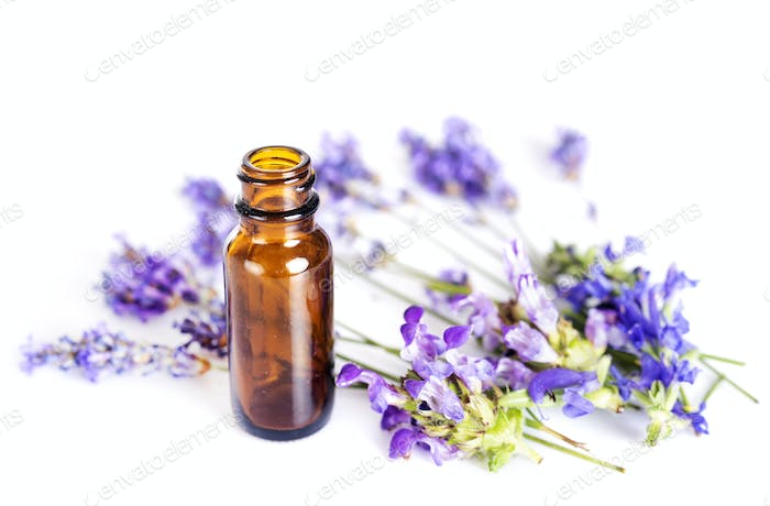 lavender and essential oils
