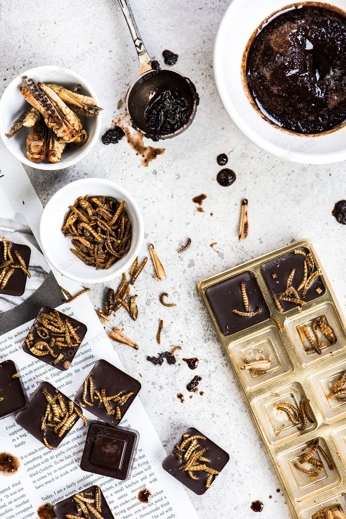 Making chocolate with edible insects