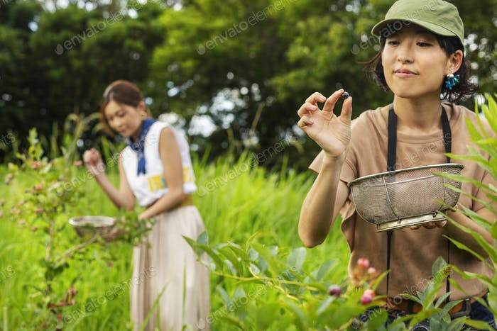 Zwei japanische Frauen pflücken Beeren auf einem Feld.