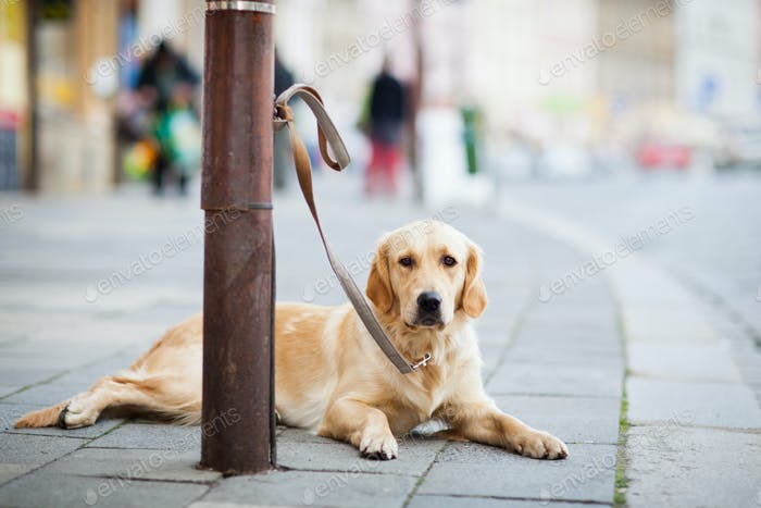 lonely cute dog waiting patiently for his master on a city stree