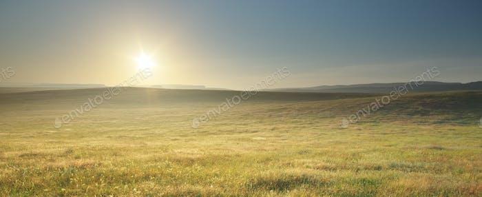 Morgen Natur Wiesenlandschaft.