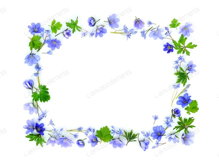 Floral rectangle made of blue spring flowers on white background
