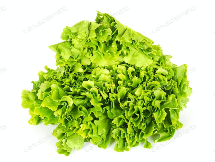 Escarole endive lettuce head front view over white