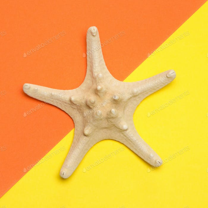 Minimal summer concept of starfish on yellow and orange