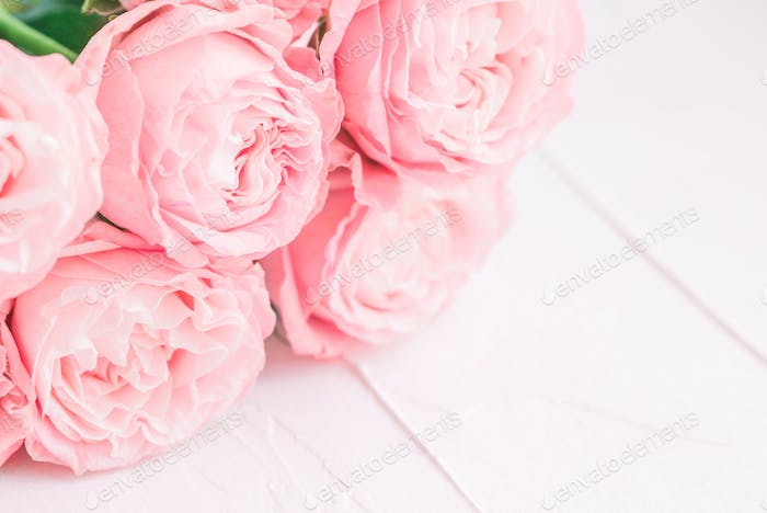 Pink roses on a white background. Soft focus. The concept of wedding and Valentines day.