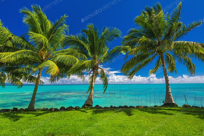 Tropical beach with grass and palm trees