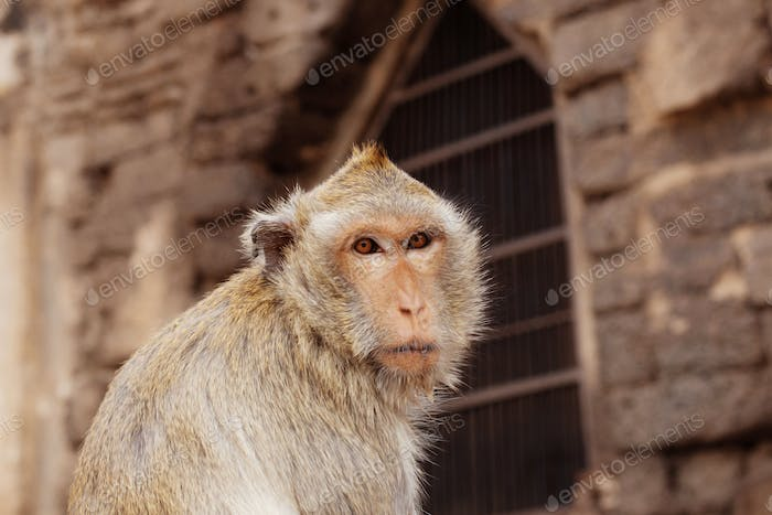 Monkey of face in a zoo
