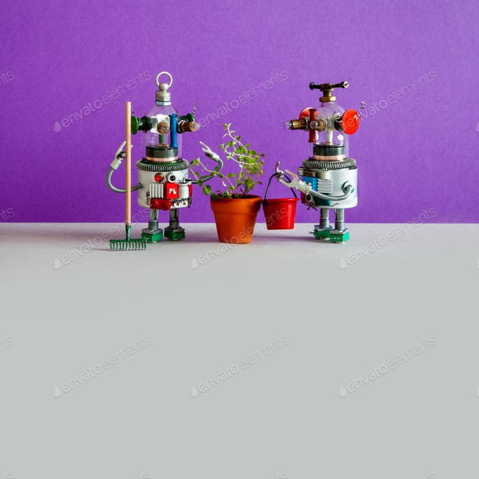 Two agronomist gardener robots and cultivated agricultural plant in a flower pot.