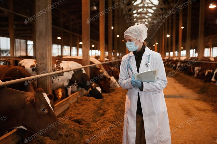 Female Veterinarian Inspecting Livestock
