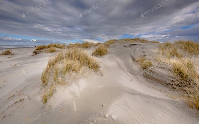 Young coastal Dunes