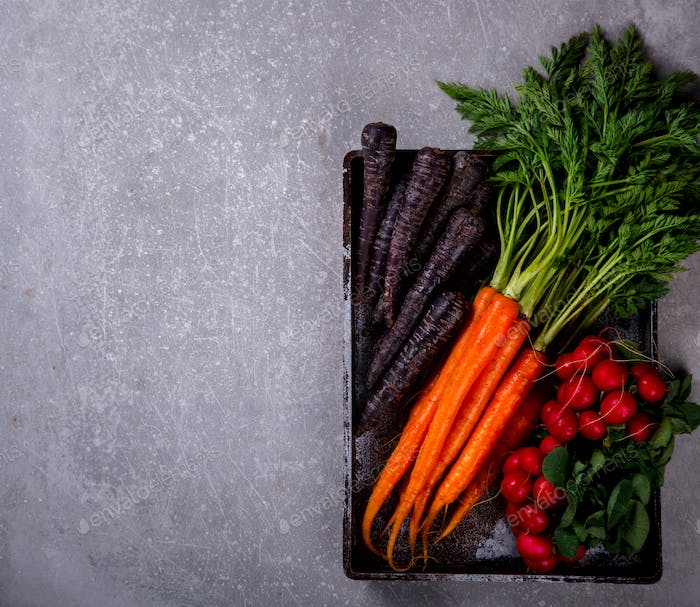 Bunch of fresh Colorful carrots with green leaves,Purple Carrot and Radishes