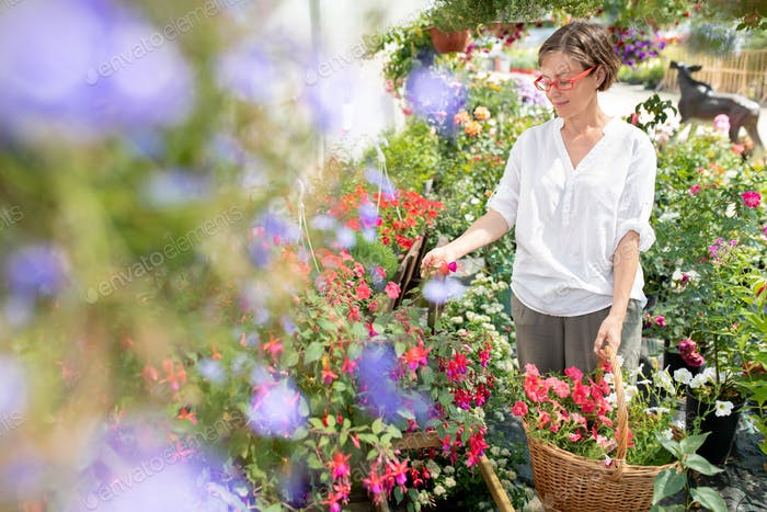 Happy casual woman with basket of fresh flowers looking at new sorts of petunias
