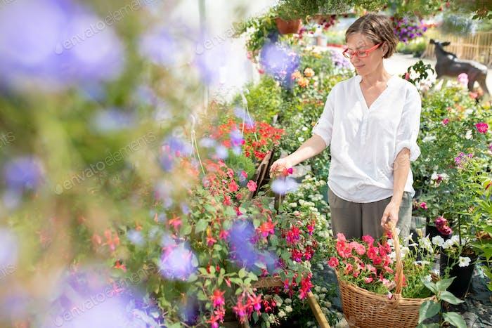 Glückliche lässige Frau mit Korb von frischen Blumen Blick auf neue Arten von Petunien