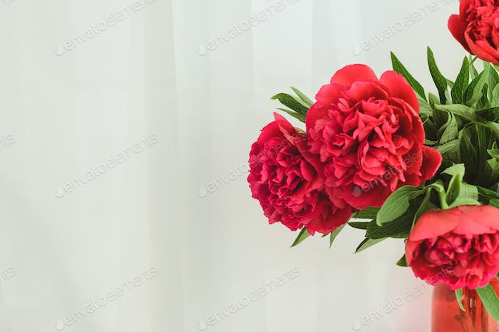 a red peony bouquet on a white background with copyspace