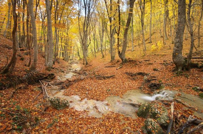 Herbst Naturlandschaft.