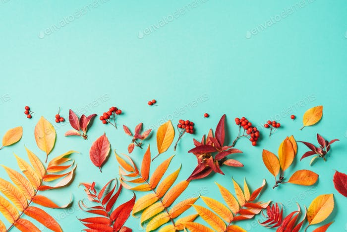 Creative layout of colorful autumn leaves over blue background. Top view. Flat lay. Autumn concept