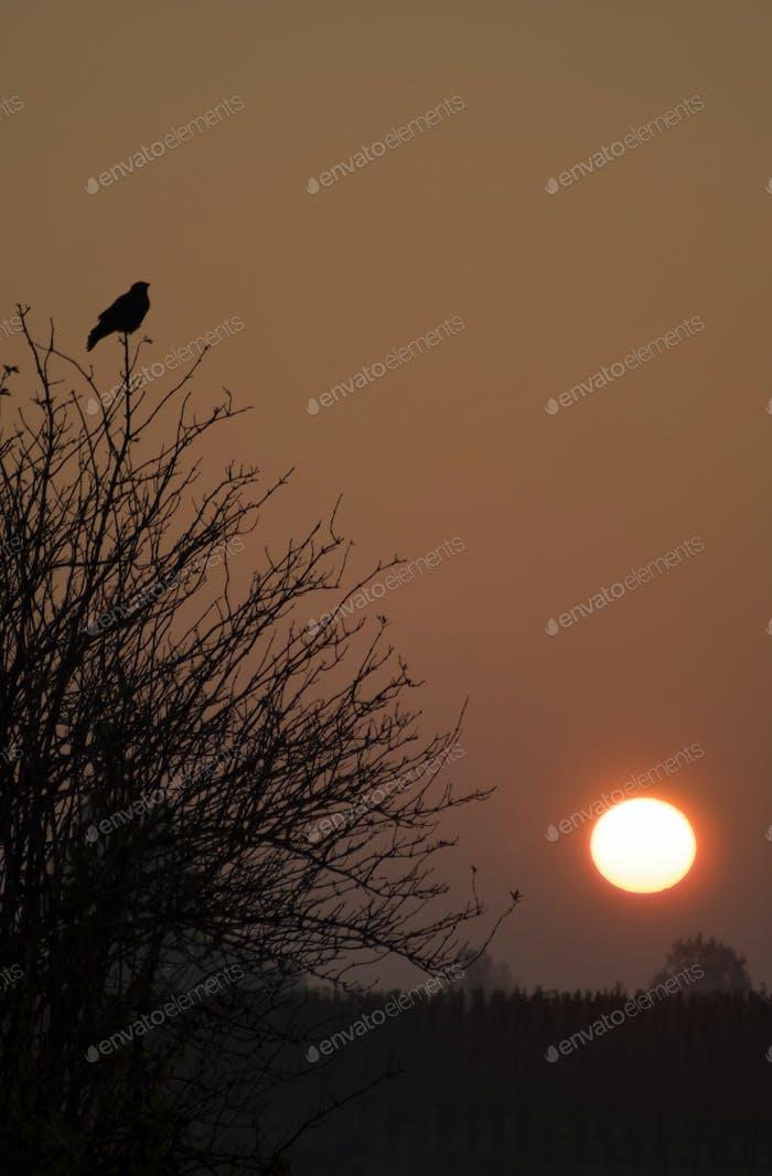 Sunrise near Dussen