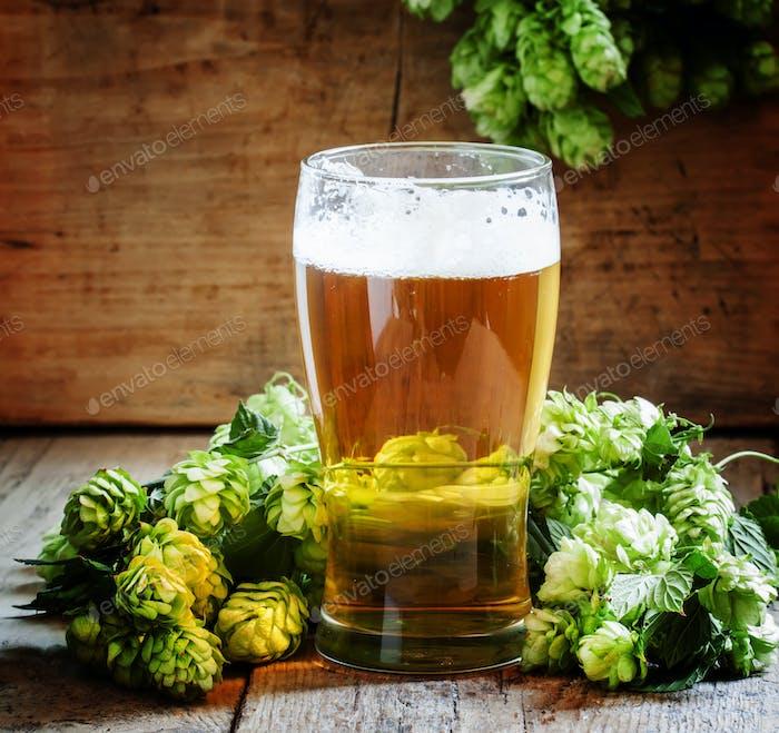Glas schaumiges Bier und Hopfenzapfen