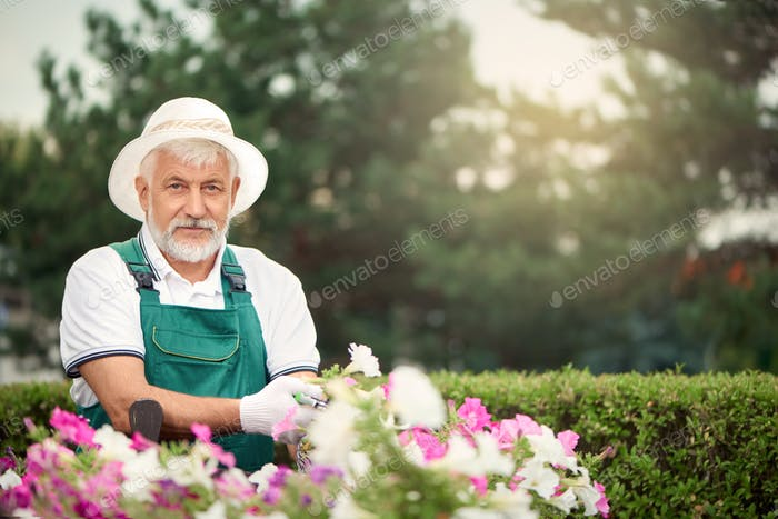 Senior gardener using secateur for flowers