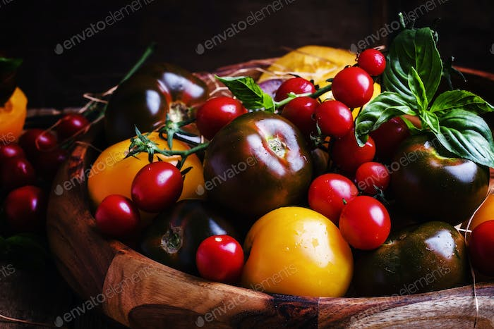 Different multicolored tomatoes