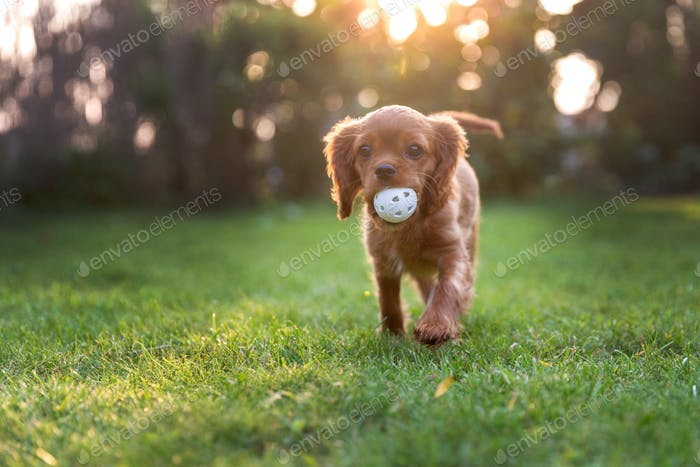Happy puppy with ball