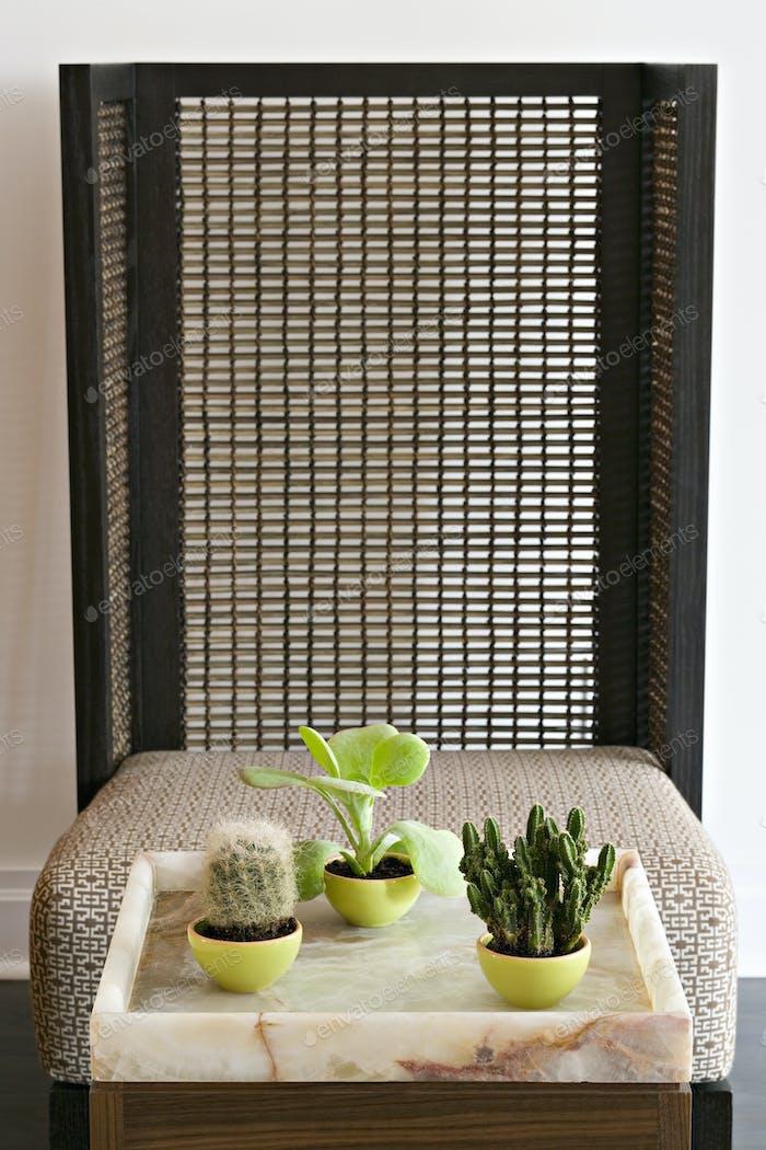 Eine Sammlung von drei Sukkulenten Kakteen Zimmerpflanzen durch einen Bambusschirm.