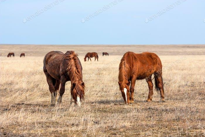Horses in prairie