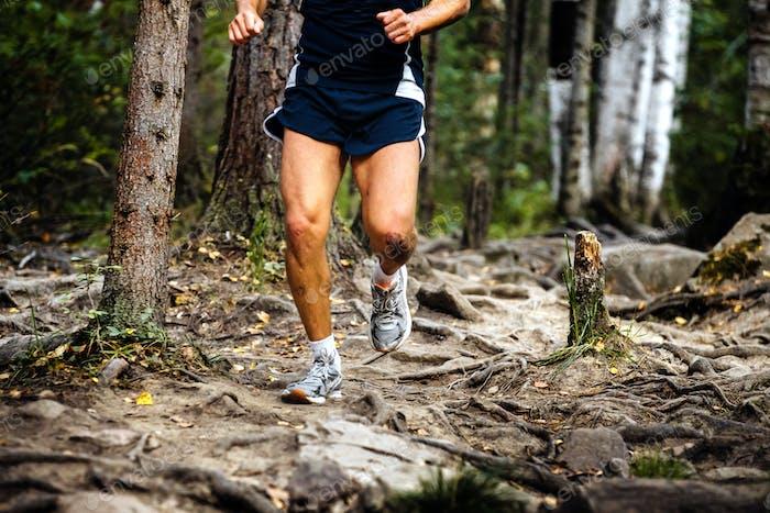 Laufmarathonläufer im Wald