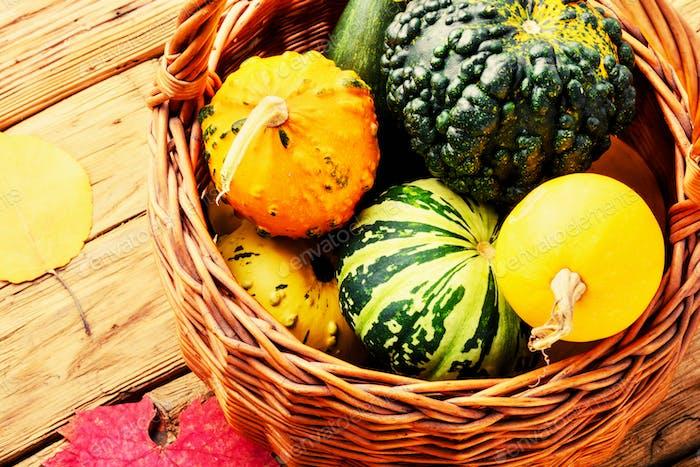 Autumn Pumpkin in basket