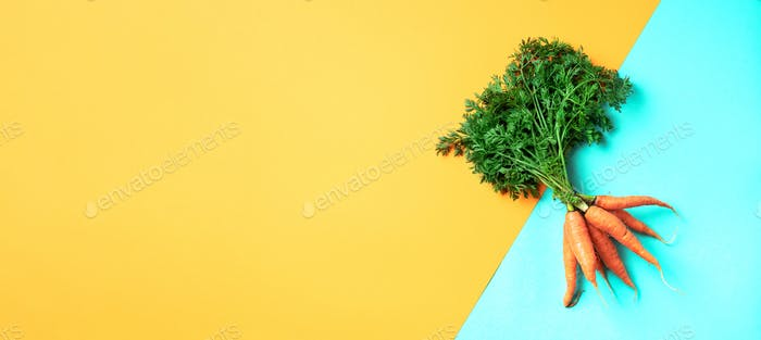 Bunch of young carrots with green tops on trendy yellow and green background. Top view. Copy space