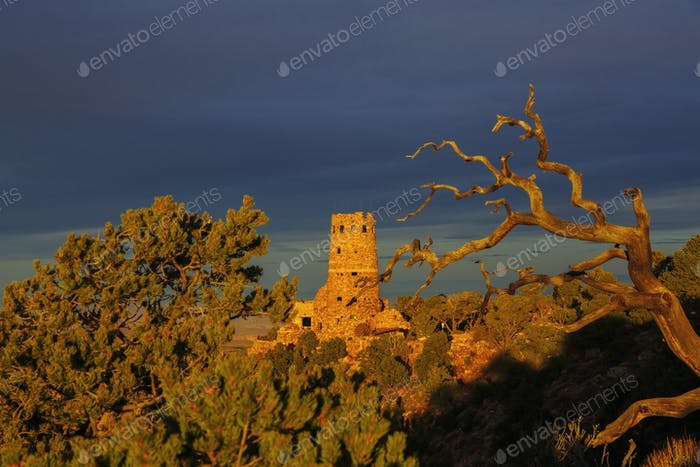 desert view watchtower and dead tree  in Grand Canyon National Park