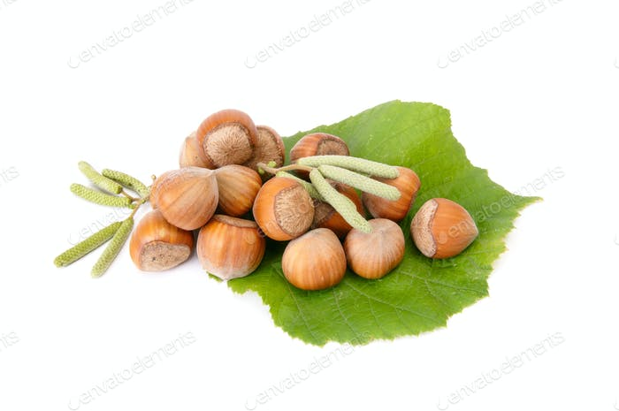 Wonderful view of hazelnuts with buds.