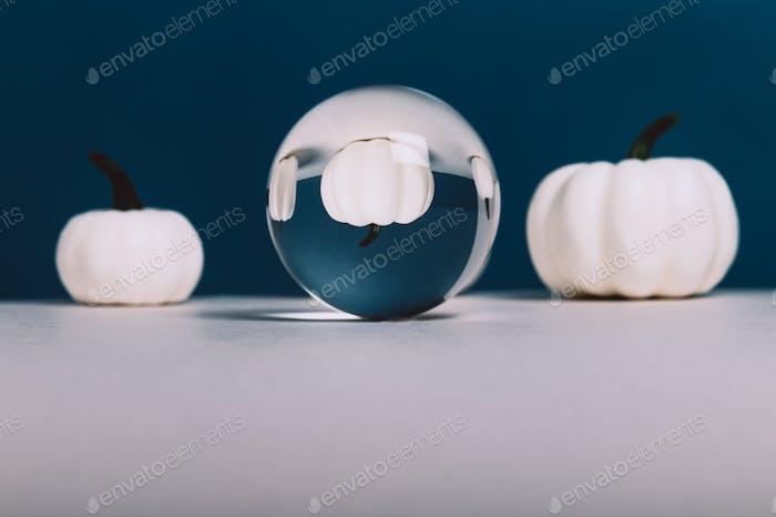 White Pumpkins. Autumn concept