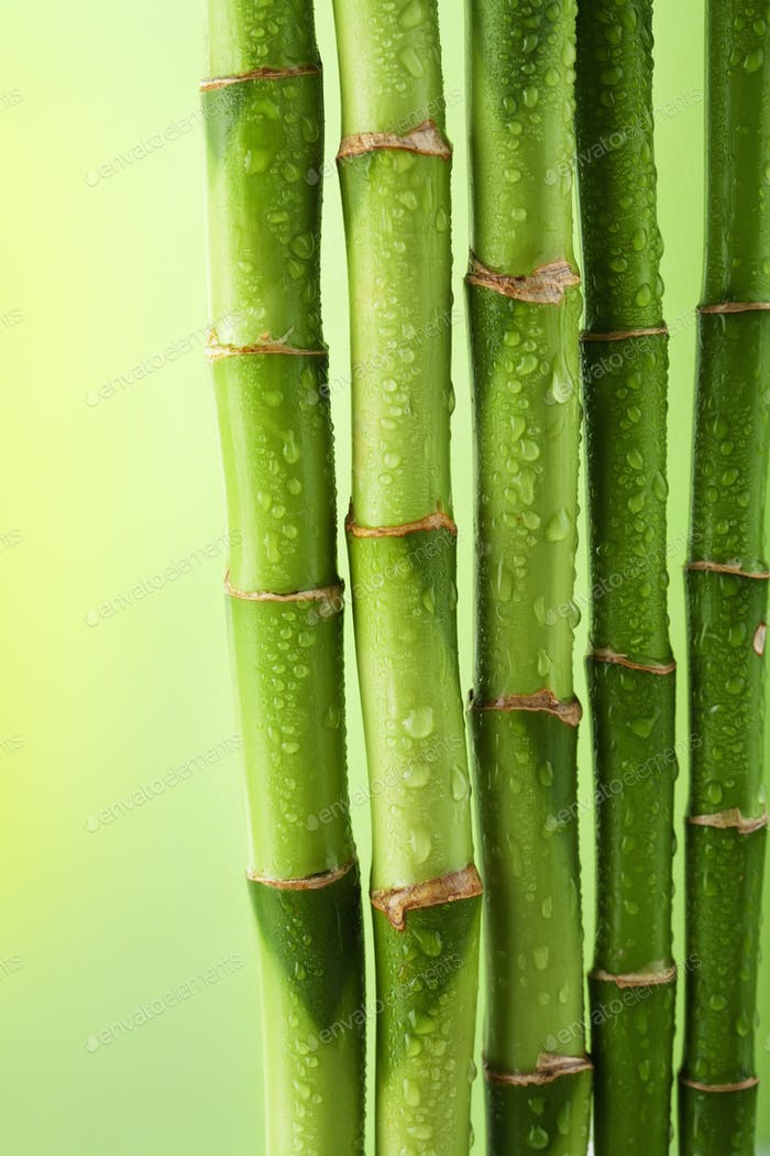 green bamboo background with water drops