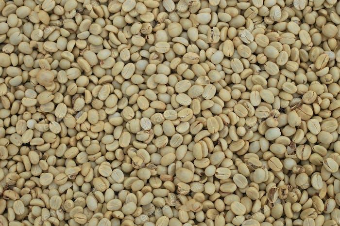 Un-roast arabica raw coffee beans close up