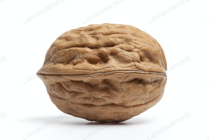 Whole single fresh Walnut