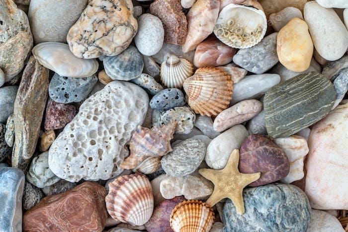 Shells, starfish and pebble stones